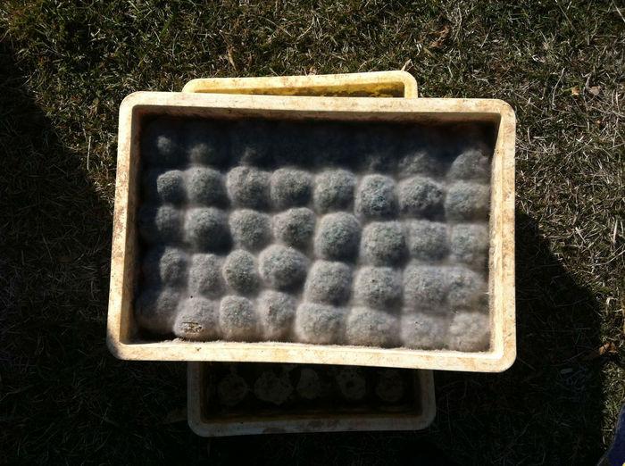 EMダンゴ。見た目は完全にカビの生えたみかん・・・。菌を混ぜた泥ダンゴを発酵させて作るそう。