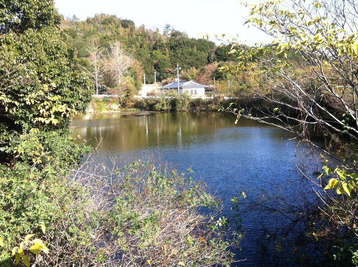 宮浦池。臭いもアオコもなく、水面はきれいになった。